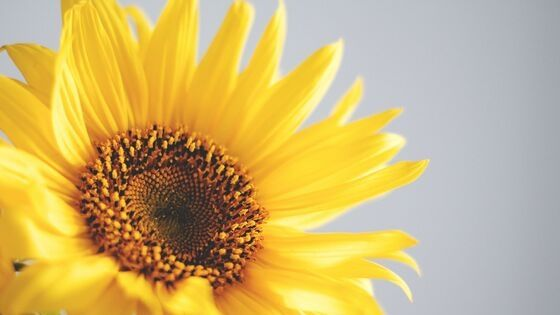 Sunflower Seeds as a Survival Food
