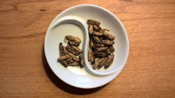 Edible insects on a plate