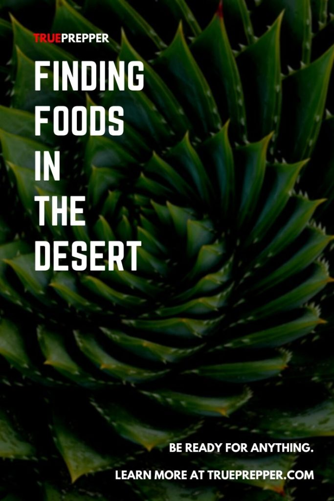 Finding Foods in the Desert