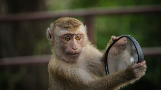 Monkey with a Survival Mirror