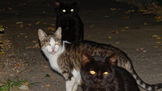 Retroreflective cat's eyes